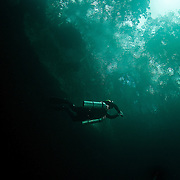 Returning to the forest light, a diver surfaces from the depths of Cenote Angelita, Quintana Roo, Mexico, © Michael Ready