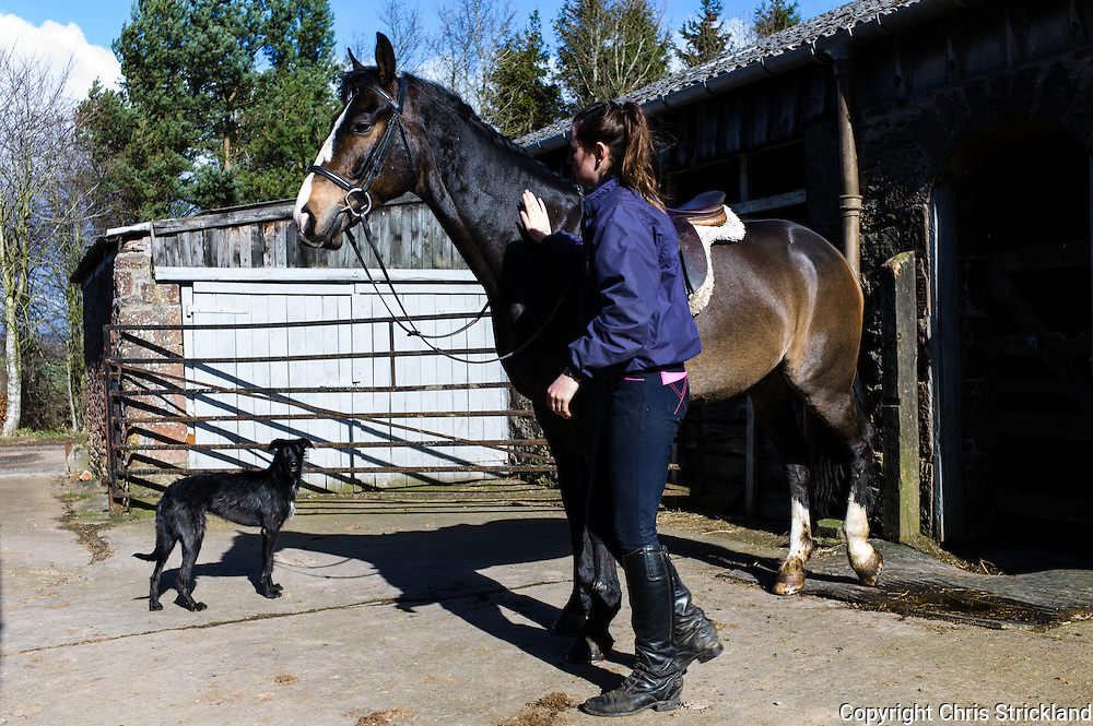 Ancrum, Jedburgh, Scottish Borders, UK. 27th March 2015. Groom Catriona gets a horse ready for exercise on a bright spring morning in the Borders.