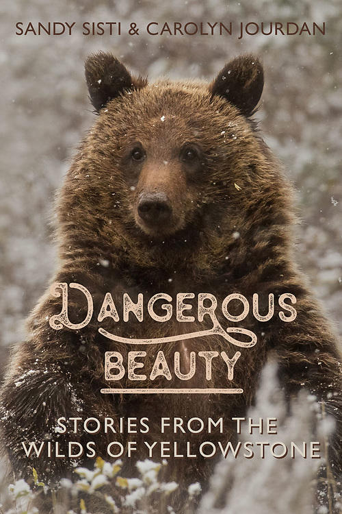 """Dangerous Beauty: Stories from the Wilds of Yellowstone"", is now available in paperback! Co-written with best-selling author, Carolyn Jourdan, the book is filled with tales of Yellowstone's amazing animals, unforgiving landscapes and unforgettable experiences. This copy of ""Dangerous Beauty"" is signed by the author."
