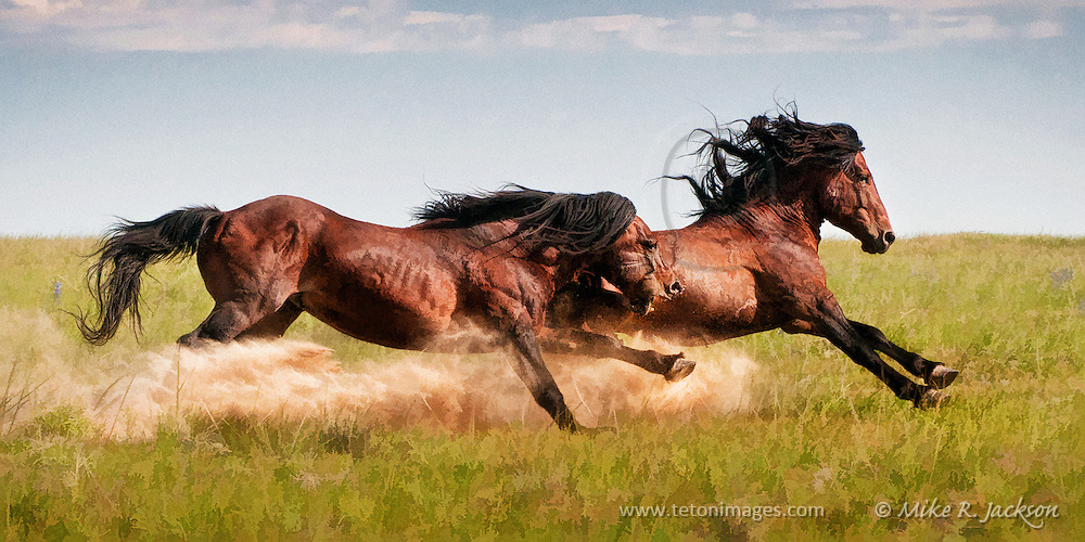 Artistic version of an action packed image of a wild stallion chasing a younger stallion away from his band of mares in northern Wyoming.
