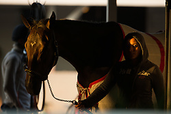 Hot walker Ludi Garcia walks horses in the shed row after workouts Tuesday, April 30, 2013 at Churchill Downs in Louisville. Photo by Jonathan Palmer