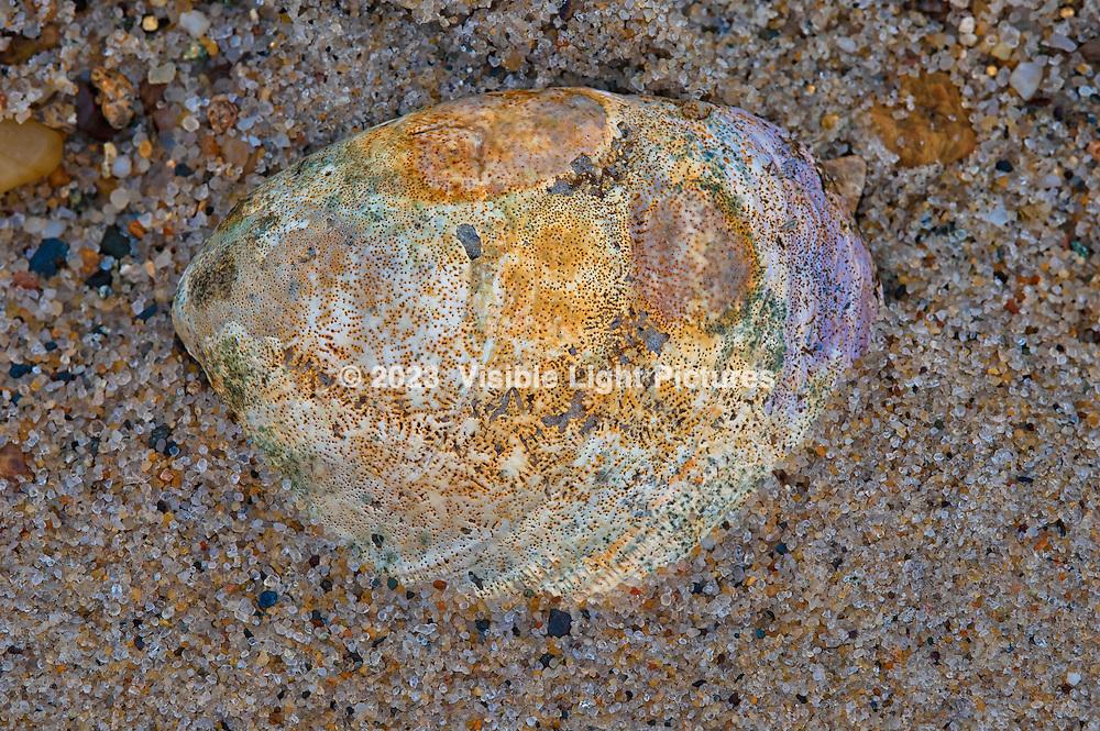 Seashell at the Wellfleet Bay Wildlife Sanctuary