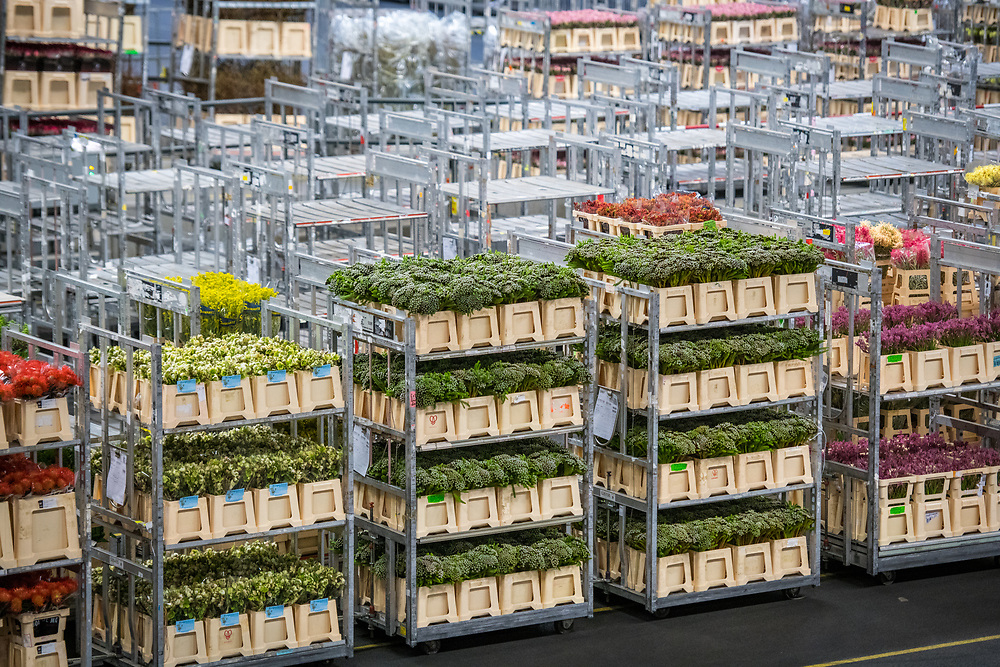 Carts of prepared flowers at the worlds largest flower auction, Royal Flora Holland. Amsterdam, Netherlands
