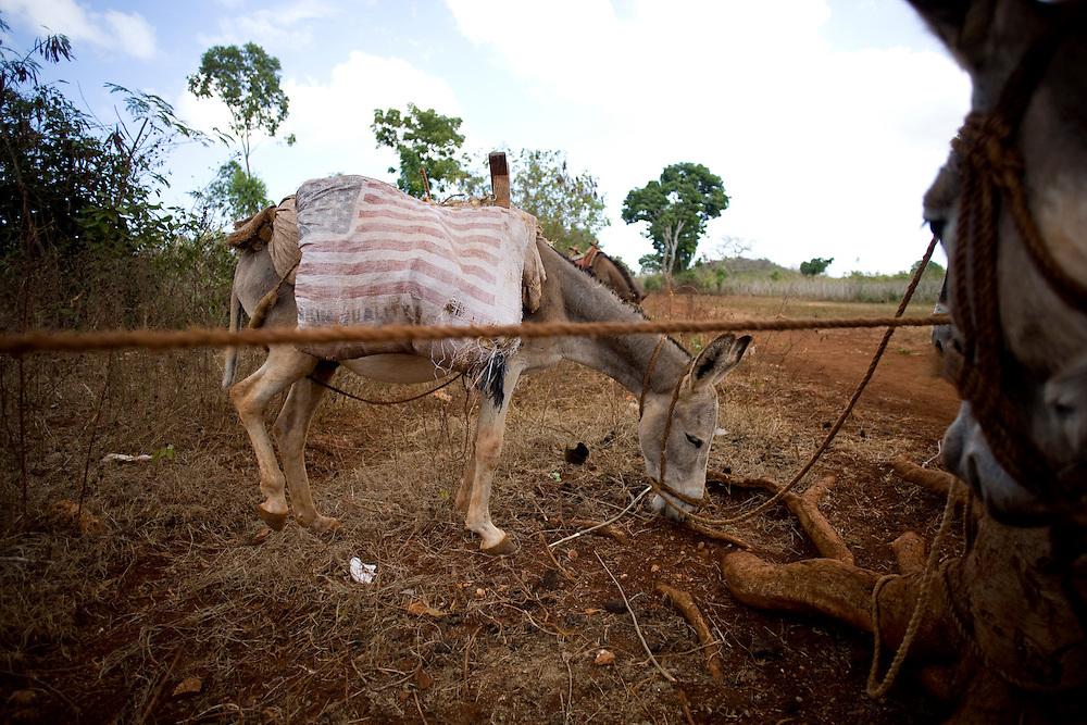 Donkeys in Plenn Lasous, Lagonav, Haiti. Photo by Ben Depp 1.30.2009