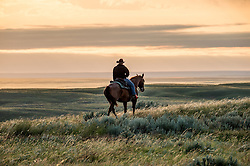 """The Nature Conservancy's Matador Ranch worker Jason Hanlon works with ranching families in Eastern Montana  at the Matador ranch """"grass bank"""". The """"grass bank"""" is an innovative way to leverage conservation gains, in which ranchers can graze their cattle at discounted rates on Conservancy land in exchange for improving conservation practices on their own """"home"""" ranches. In 2002, the <br /> Conservancy began leasing parts of the ranch to neighboring ranchers who were suffering from  severe drought, offering the Matador's grass to neighboring ranches in exchange for their  participation in conservation efforts. The grassbank has helped keep ranchers from plowing up native grassland to farm it; helped remove obstacles to pronghorn antelope migration; improved habitat for the Greater Sage-Grouse and reduced the risk of Sage-Grouse colliding with fences; preserved prairie dog towns and prevented the spread of noxious weeds. (Photo By Ami Vitale)"""