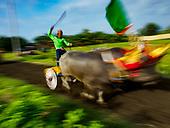 Buffalo Racing in Jembrana