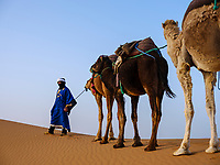 MEKNES - TAFILALET, MOROCCO - CIRCA APRIL 2017: Berber with camels in the dunes of the Moroccan Sahara Desert