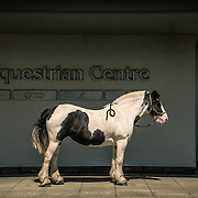 Rosie. West Lothian-Oatridge Equestrian Centre Oatridge Equestrian Centre.<br /> <br /> You arrive at the centre via a University campus. I got lost and nearly ended up at a set of farmhouses. The centre's design is purely functional and was slightly lost in its landscape. I signed in and walked into the interior and saw all of the spaces where the horses do their training. The red and white stripy bars were nice and colourful but otherwise it felt quite empty. <br /> I went outside for a walk and ended up in a barley field looking back at the building. Its geometry struck me and reminded me of Edward Hopper, broad strips of green, blue, grey and black with white blocks of stripes. I took a few shots and thought that what was missing from this was really a horse. Some staff introduced me to two horses, Rosy and Linda. Linda was very nervous and had to keep her eye on Rosy or she'd act out. I placed Rosy near the centre of the shot, like a slice of American Wild West.<br /> <br /> Rosie. West Lothian-Oatridge Equestrian Centre Damian Shields 2014<br /> Images © Scottish Civic Trust, shown courtesy of Damian Shields Client: Scottish Civic Trust