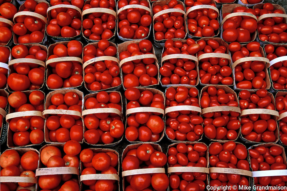 Tomatoes in basket at market<br /> <br /> Ontario<br /> Canada