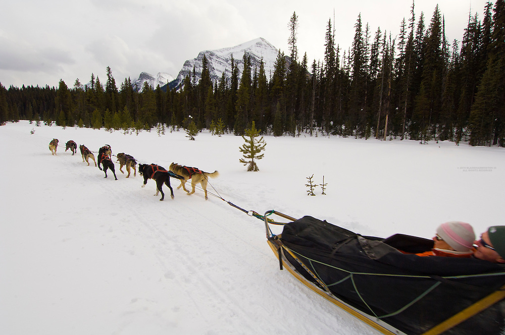 Dog sled tour (with Kingmik Dogsled Tours) along the Continental Divide, near Lake Louise, Alberta, Canada