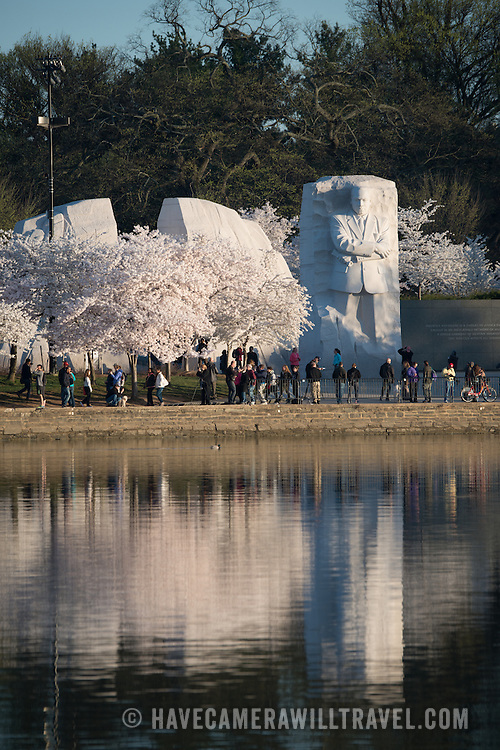 The cherry trees next to the MLK Memorial in bloom and reflected on the still water of the Tidal Basin.