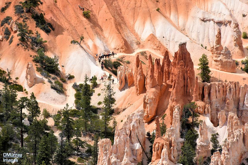 Horseback Riding Trail. Bryce Canyon National Park, Utah, USA