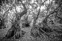 everglades gallery johnbobcarlos johnbob florida artist Big cypress landsapes