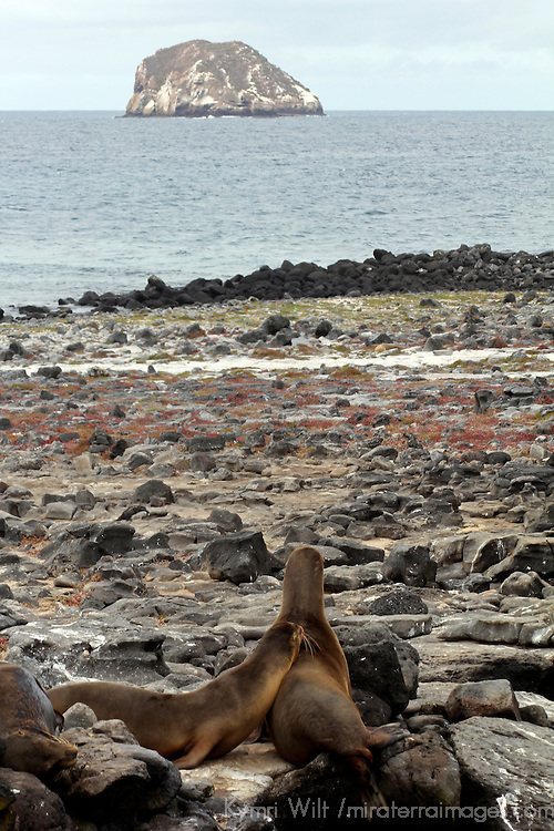 South America, Ecuador, Galapagos, South Plaza Island. Sea lions of South Plaza Island.