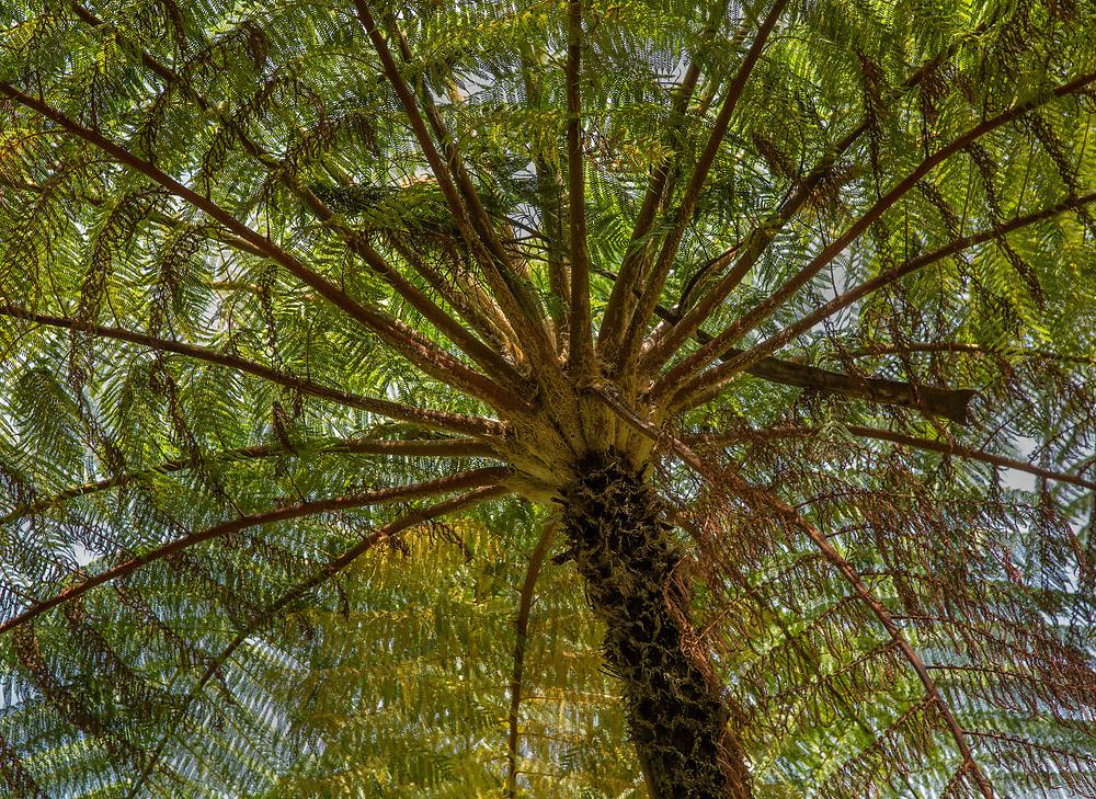 Palm Tree, Hawaii Tropical Botanical Garden, Pāpa'ikou