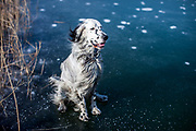 @rudythetherapist  sitting on a frozen pond in Stara Lysa, CzechRepublic. Rudy was born on the 01.01.2017. He is on a mission and wants to make the world a better place - follow him to see how...