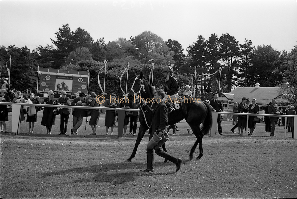 "08/05/1965<br /> 05/08/1965<br /> 08 May 1965<br /> The 1965 Gold Flake Meeting at Leopardstown Racecourse, Co. Dublin. Image shows Mr A.J. Russell's ""Scotch Corner"", (J.M. Murtagh up) winner of the  the Bristol Handicap race."