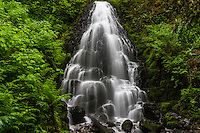 Spring in the Columbia River Gorge at Fairy Falls on a rainy morning.