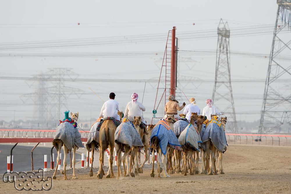 Dubai UAE Camels and jockeys training at Nad Al Sheba Camel Racetrack at sunset