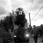 Italy, Basilicata- Down from Madonna del Pollino, trasporting the fir tree © 2012 Mama2