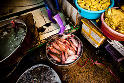Fish squeezed in a local market tank, Hanoi, Vietnam, Southeast Asia