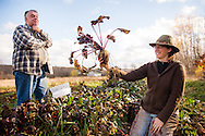 Trevanna Grenfell shows off a nice beet at a Veggies For All beet harvest, Unity Maine
