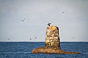 Skarv poserer på pir ved Flø | Cormorant posing on a pir at Flø.