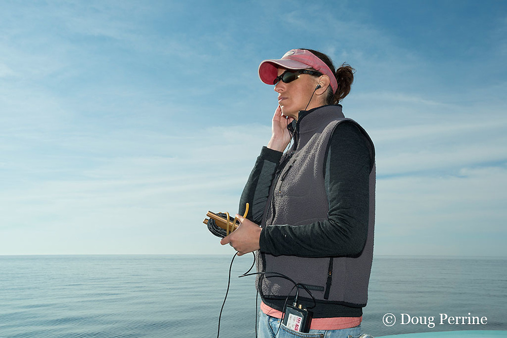 assistant scientist Monica Zani listens for whale calls with a hydrophone aboard the New England Aquarium research vessel Nereid, Grand Manan Basin, Bay of Fundy ( North Atlantic Ocean )