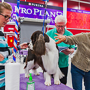 The 2017 ESSFTA National   Breeders Showcase event took place at Purina Farms, in Gray Summit, MO. Photography was made July 17, 2017. It was hot outside, just above 100 degrees, but thankfully, the facility was kept nice and cool for the dogs and exhibitors.