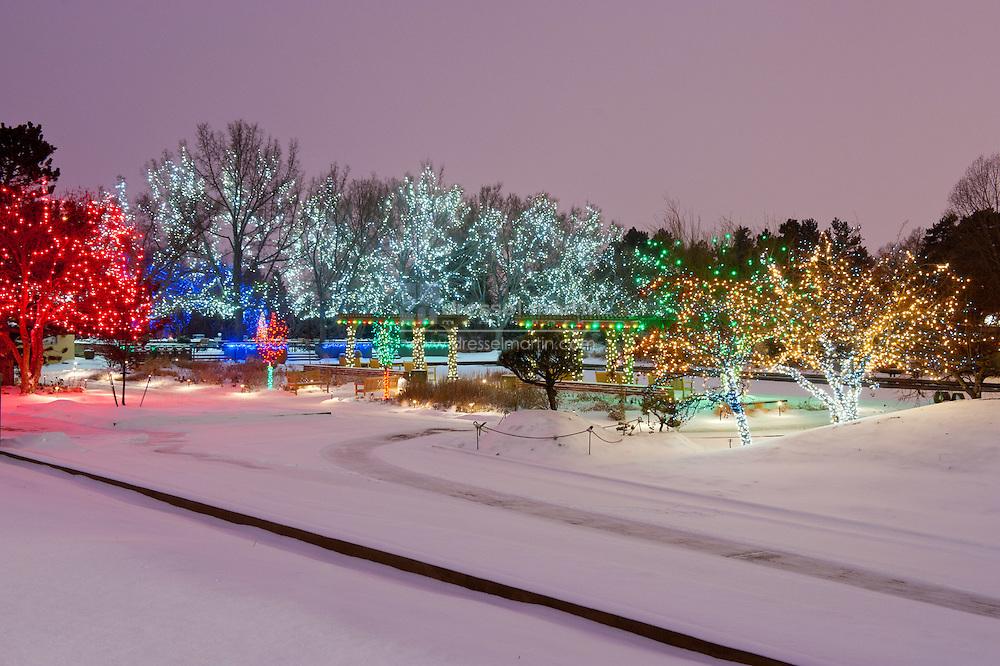 Blossoms of Light under snowfall, Denver Botanic Gardens, 2010