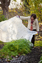 Protecting carrots with horticultural fleece