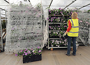 © under license to London News Pictures. LONDON, UK  19/05/2011.An exhibitor checks her delivery of plants. Exhibitors ready their displays today (19 May 2011) ahead of The Chelsea Flower show in London. Every year the grounds of the Royal Hospital, London, are transformed into show gardens, inspirational small gardens and vibrant horticultural displays that make up the world's most famous flower show which runs from 24 May 2011 to 28 May 2011. Photo credit should read Stephen Simpson/LNP.