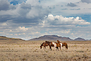 Horses, Navajo Reservation, Arizona