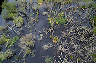 An aerial overlooking the wetland habitat and felled trees created by beavers in Dubh Loch as part of the official Scottish Beaver Trial.