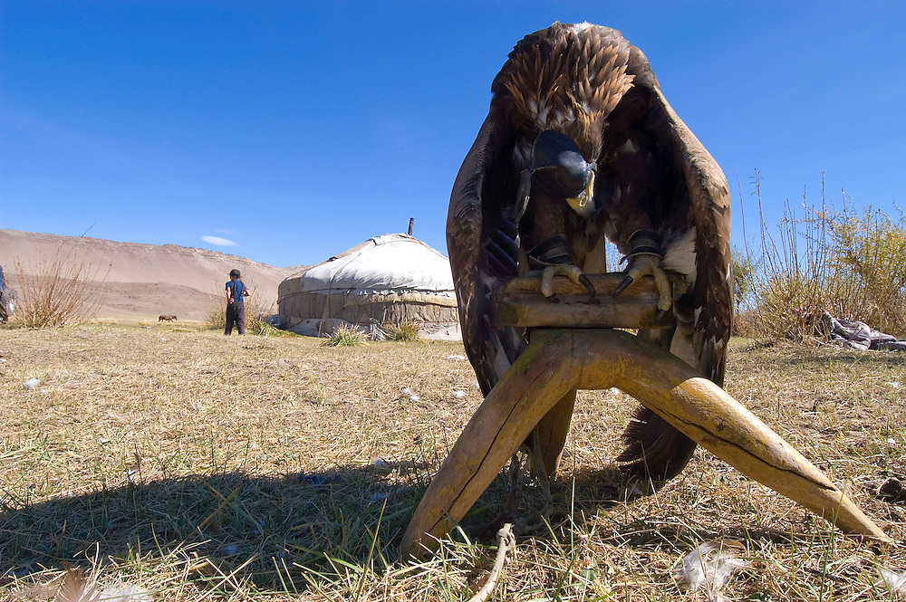A hooded golden eagle sits outside its owners gher before the Eagle Hunting Festival which celebrates Kazakh culture, Bayan Olgi, Mongolia, Sept 16, 2004.  Kazakhs have hunted with eagles for centuries.  The Eagle Hunting Festival has revived Kazakh culture which was surpressed under Soviet rule.