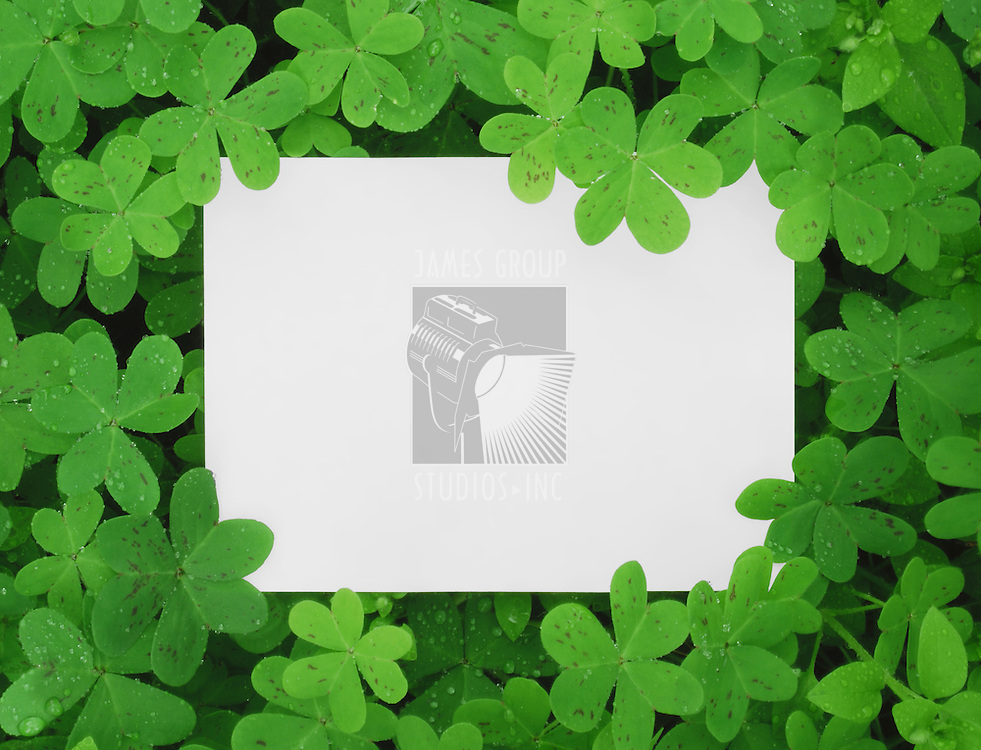 A Blank Card Surrounded in a Patch of Clovers.
