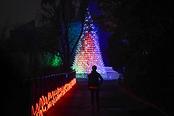 "© Licensed to London News Pictures. 22/11/2018. LONDON, UK. A staff member poses against a Christmas tree made from 365 recycled Christmas sledges. Preview of the first ""Christmas at London Zoo"", a festive transformation at ZSL London Zoo which features a one-mile illuminated pathway in a magical after-dark experience.  Historic buildings have been transformed for the event, with glowing fountains lighting the Grade I listed Lubetkin Penguin Pool and festive projections lighting up the historic Mappin Terraces.  The show runs 22 November to 1 January 2019.  Photo credit: Stephen Chung/LNP"