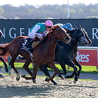 Grasped - James Doyle wins from Serenity Spa - Oisin Murphy and Starlight Symphony - John Fahy<br /> 32Red Immortal Romance Slot Fillies´ Handicap<br /> Lingfield Park 9/4/2014.<br /> ©
