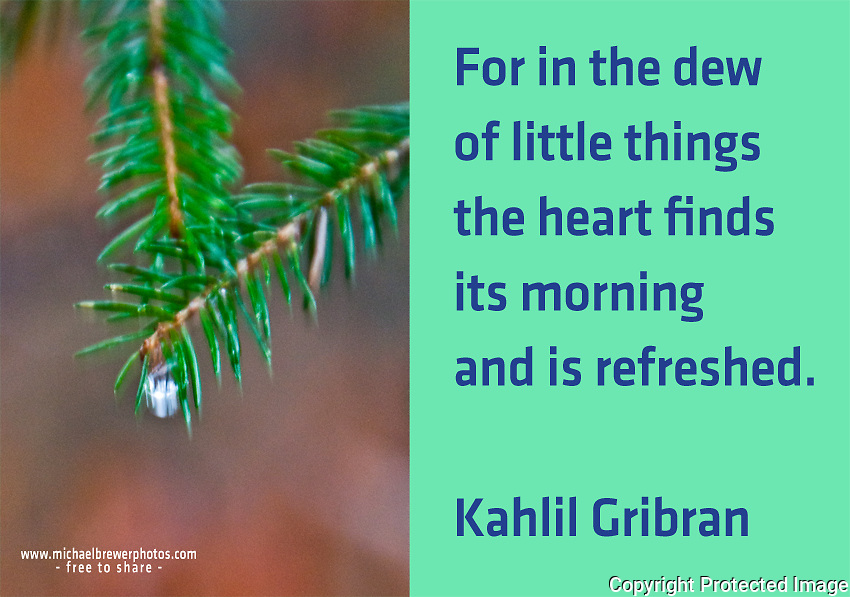 Quote:  For in the dew of little things the heart finds its morning and is refreshed.  By Kahlil Gibran.  Meme.