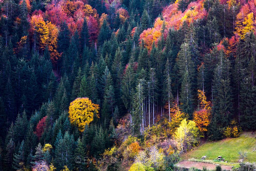 Rhodopean forest