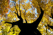 2012-11-25-Wisconsin Fall