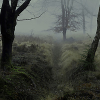 Misty dawn in the New Forest, Hampshire