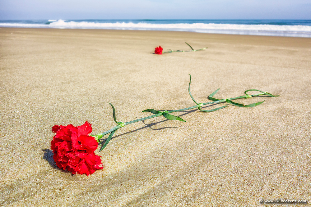 Funeral carnations washed up on the beach at Kitty Hawk, NC.