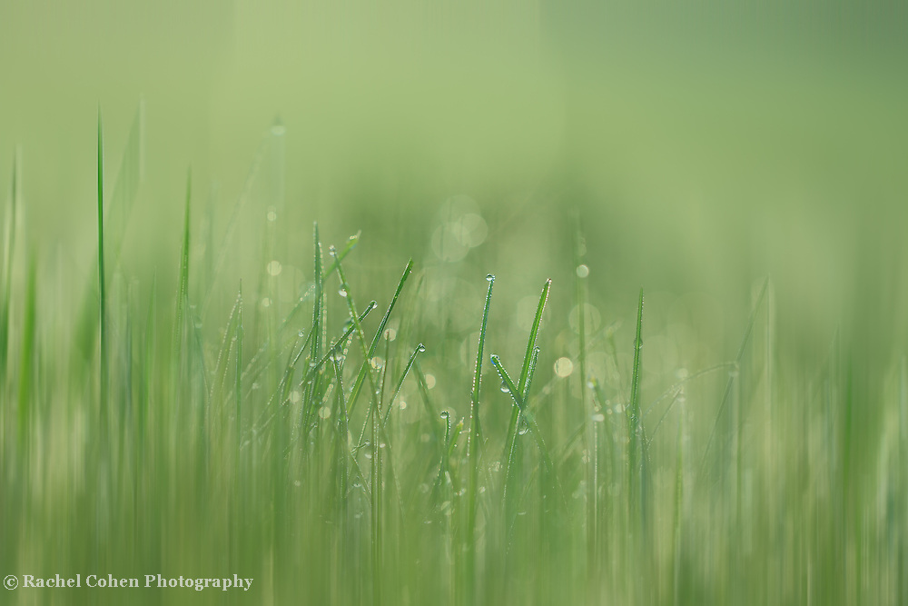 &quot;Green Streak&quot;<br />