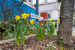 Royal Mail - Spring arrives in Hop Street in North Greenwich. London, March 15 2018.