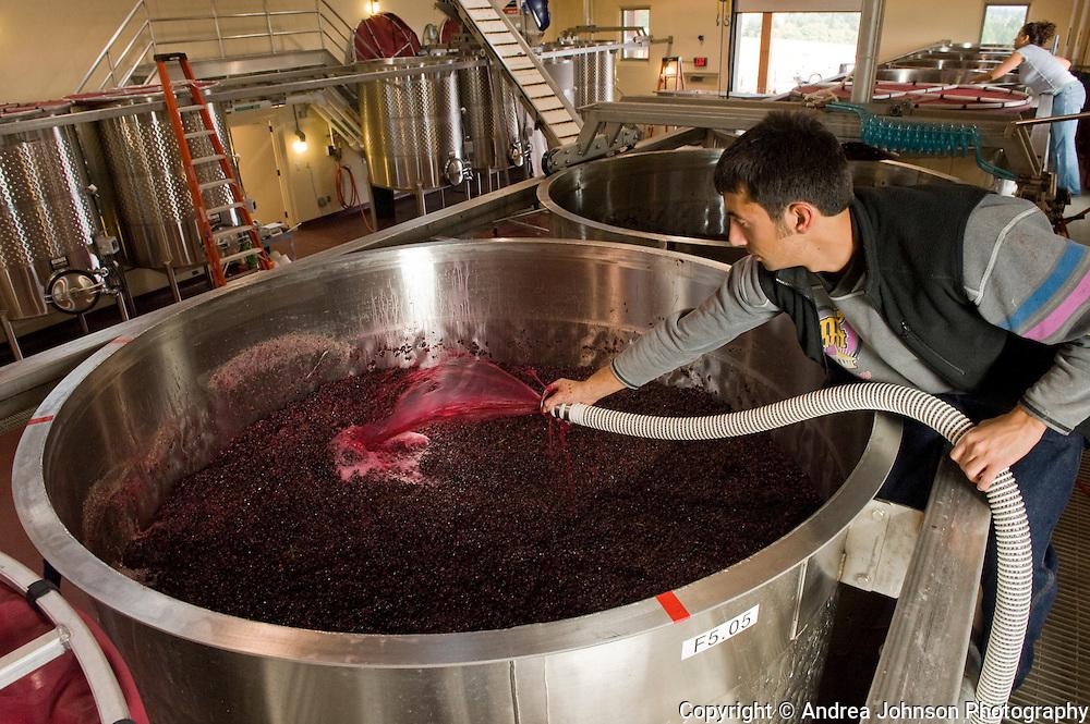 Harvest at Stoller Vineyards, Dundee Hills, Willamette Valley, Oregon