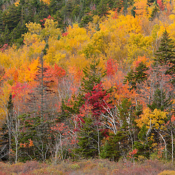 Fall colors rise from the shore of Zealand Pond. White Mountain National Forest, New Hampshire.