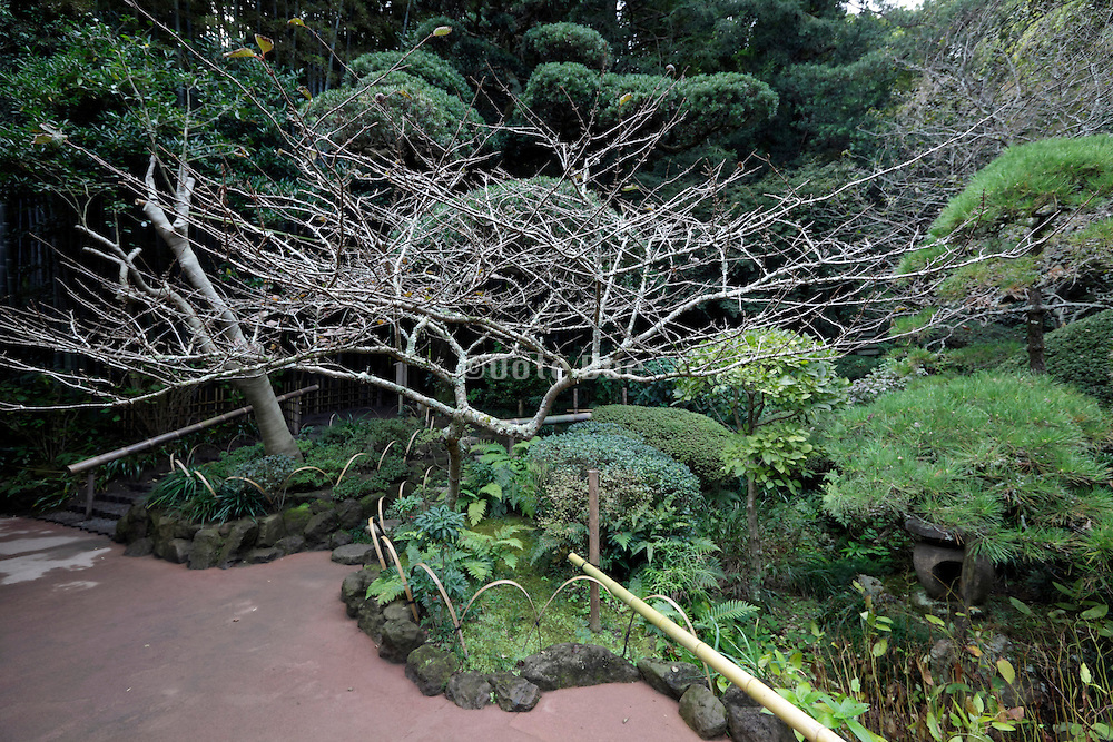elaborate botanical trees and plant garden