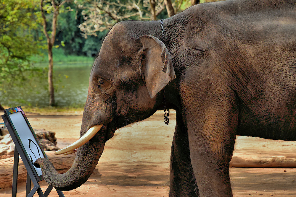 Elephant Painting in Hang Chat, Thailand<br />