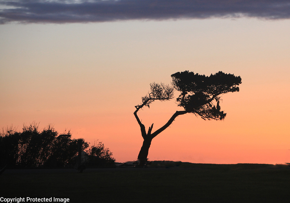 A scrubby cedar stands at the coast in this sunset shot taken along the Northwest Pacific.